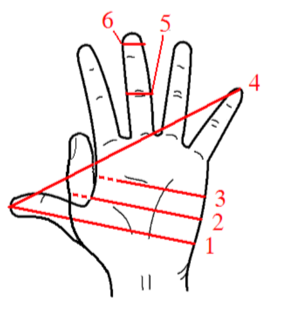 teaching measurement hand measures