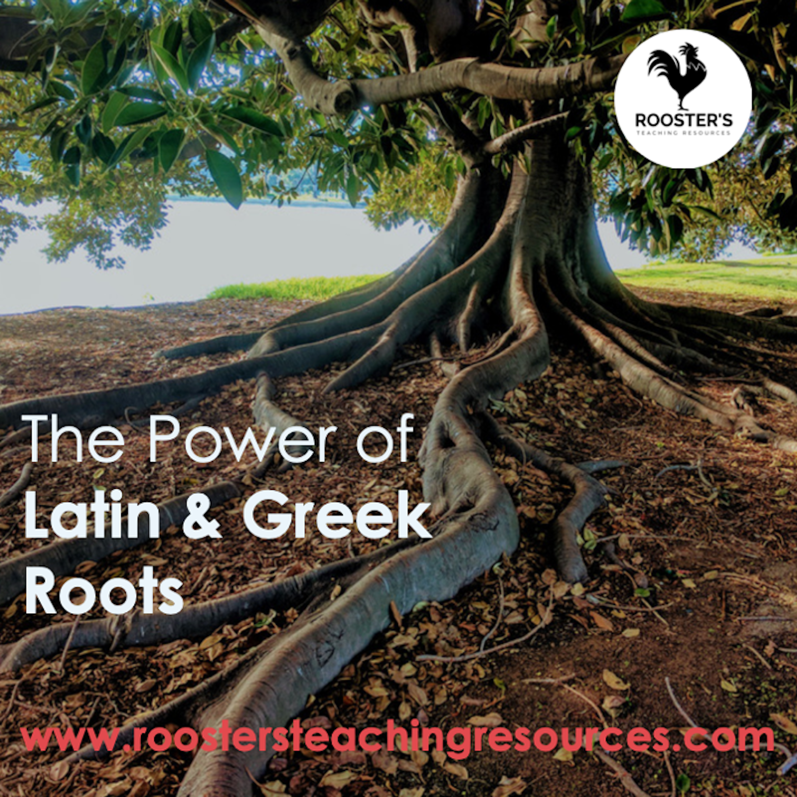 latin-and-greek-roots